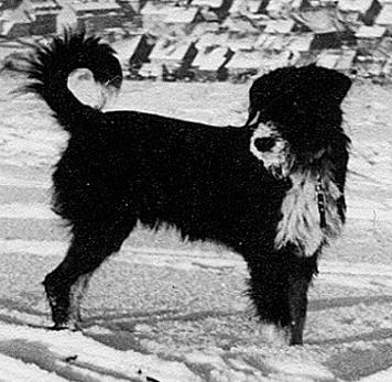Foto: Der hupende Hund